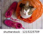 Cute Cat In A Plastic Shopping...