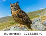 eagle owl  also known as the... | Shutterstock . vector #1215238840
