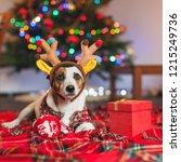 dog under a christmas tree. pet ... | Shutterstock . vector #1215249736