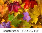 colorful autumn leaves | Shutterstock . vector #1215317119