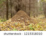 large nest under the old tree....   Shutterstock . vector #1215318310