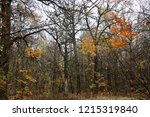 wild natural forest of old... | Shutterstock . vector #1215319840