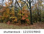 wild natural forest of old... | Shutterstock . vector #1215319843