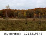wild natural forest of old... | Shutterstock . vector #1215319846