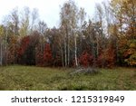 wild natural forest of old... | Shutterstock . vector #1215319849