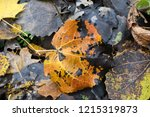 autumn colorful barberry red... | Shutterstock . vector #1215319873