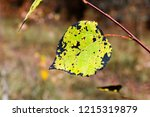 autumn colorful barberry red... | Shutterstock . vector #1215319879