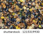 colorful backround image of... | Shutterstock . vector #1215319930