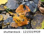 colorful backround image of... | Shutterstock . vector #1215319939