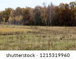wild natural forest of old... | Shutterstock . vector #1215319960