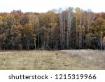 wild natural forest of old... | Shutterstock . vector #1215319966