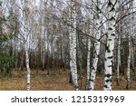 wild natural forest of old... | Shutterstock . vector #1215319969