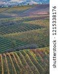 langhe region vineyards in... | Shutterstock . vector #1215338176