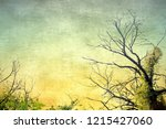 vintage bare tree in sepia and... | Shutterstock . vector #1215427060