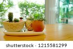 cactus pots on the table at the ... | Shutterstock . vector #1215581299