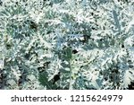 background of white green... | Shutterstock . vector #1215624979