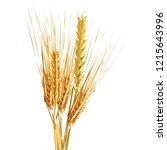 yellow ripe spikelets and... | Shutterstock .eps vector #1215643996