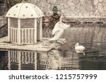 two white swans on the pond...   Shutterstock . vector #1215757999