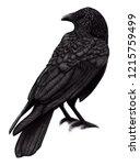 crow illustration black birds...   Shutterstock . vector #1215759499
