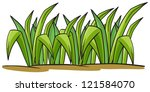 illustration of a grass on a... | Shutterstock . vector #121584070