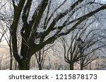 zrodliska park  lodz  poland | Shutterstock . vector #1215878173