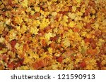 Small photo of Colorful backround image of fallen autumn leaves perfect for seasonal use