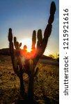 mandacaru cacti  portrait at... | Shutterstock . vector #1215921616