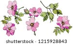 wildflower rosa canina in a...   Shutterstock .eps vector #1215928843