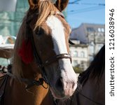 horses in the center of the old ... | Shutterstock . vector #1216038946