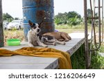 homeless dogs live in temples ... | Shutterstock . vector #1216206649