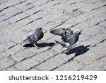 birds free in nature   Shutterstock . vector #1216219429