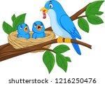 mother blue bird feeding babies ... | Shutterstock .eps vector #1216250476