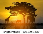 Stock photo silhouette animals at sunset time 1216253539