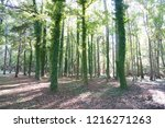 in the forest of south carolina.... | Shutterstock . vector #1216271263