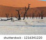 dead camel thorn trees  ... | Shutterstock . vector #1216341220