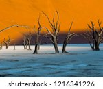 dead camel thorn trees  ... | Shutterstock . vector #1216341226