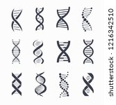 dna different icons set  a... | Shutterstock . vector #1216342510