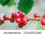aceh coffee beans | Shutterstock . vector #1216352260