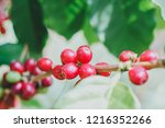 aceh coffee beans | Shutterstock . vector #1216352266