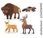 north america wild animals set. ... | Shutterstock .eps vector #1216356940