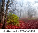 red autumn forest mist road... | Shutterstock . vector #1216360300