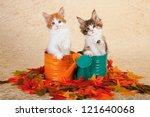 Moggie Kittens Sitting Inside...