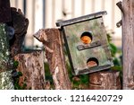Birdhouse Standing On The...