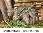 cute baby elephant   Shutterstock . vector #1216458709