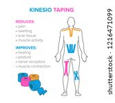 kinesio taping. reduses and... | Shutterstock .eps vector #1216471099