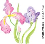 Iris flowers - stock vector