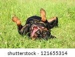 Happy Rottweiler Dog Resting O...