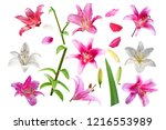 collection of pink and white... | Shutterstock . vector #1216553989