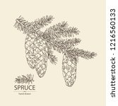 spruce  branch of spruce with... | Shutterstock .eps vector #1216560133