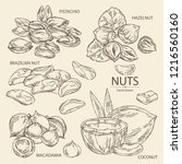 collection of nuts  pistachio ... | Shutterstock .eps vector #1216560160